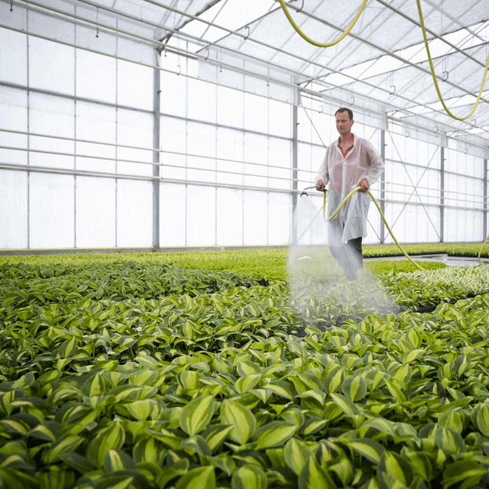 Tegel 2.1 - Greenhouse tissue culture plants in vivo watering