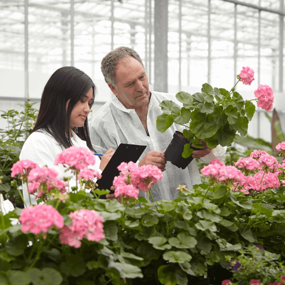 checking the plants for viability
